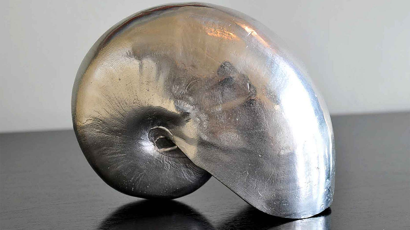 Mollusk Sea Shell Sculpture