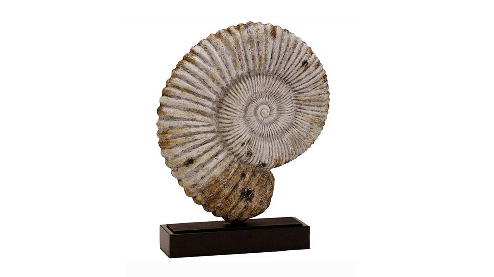 Fossil Sculpture
